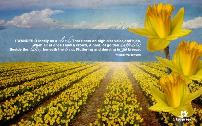 daffodil-1920x1200